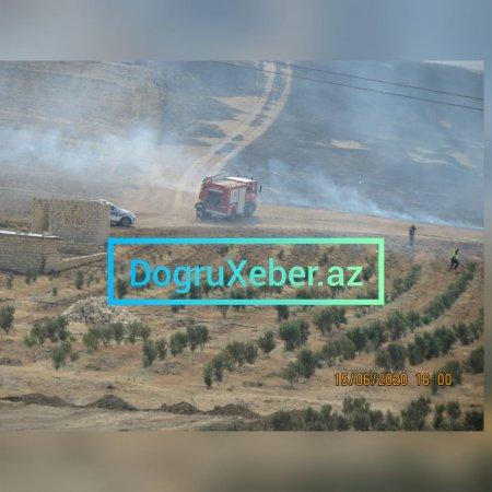 Qaradağ rayon 5 saylı yaşıllaşdırma idarəsinin ərazisində yanğın hadisəsi-Video/Foto