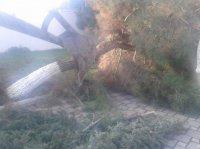 Qazax şəhərindəki Şəhidlər xiyabanın ərazisində şam ağaclarını kəsiblər